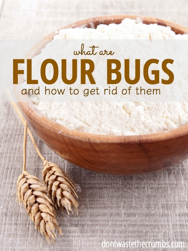 Find little brown bugs in the pantry? They're flour bugs, aka weevils. Learn what causes them, how to make them go away & whether it's safe to eat the food! :: DontWastetheCrumbs.com