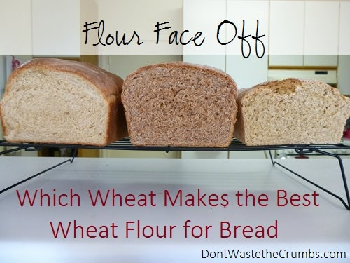 Which Wheat Makes the Best Wheat Flour for Bread