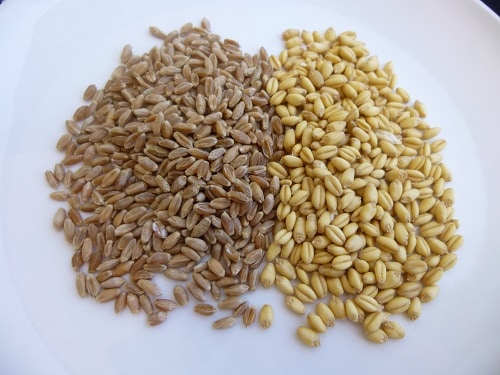 Hard Red Wheat Berries Soft White Wheat Berries
