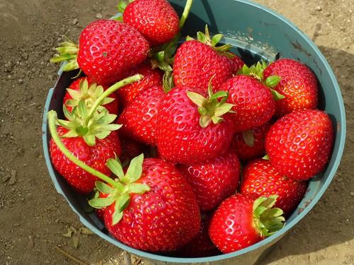 Buckets of Strawberries 2