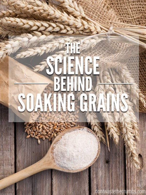 Understanding the basic science behind soaking grains helps us decide whether or not it benefits our families. Read up on why soaked flour is beneficial. :: dontwastethecrumbs.com
