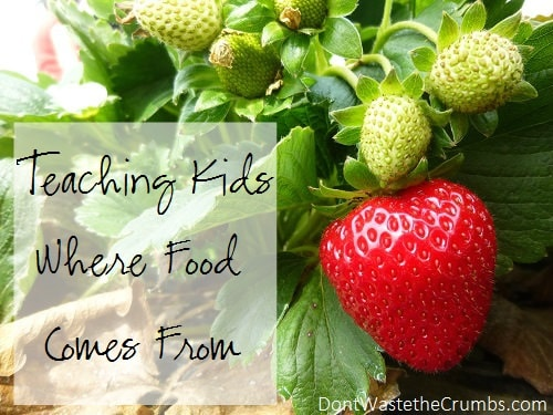 Teaching Kids Where Food Comes From
