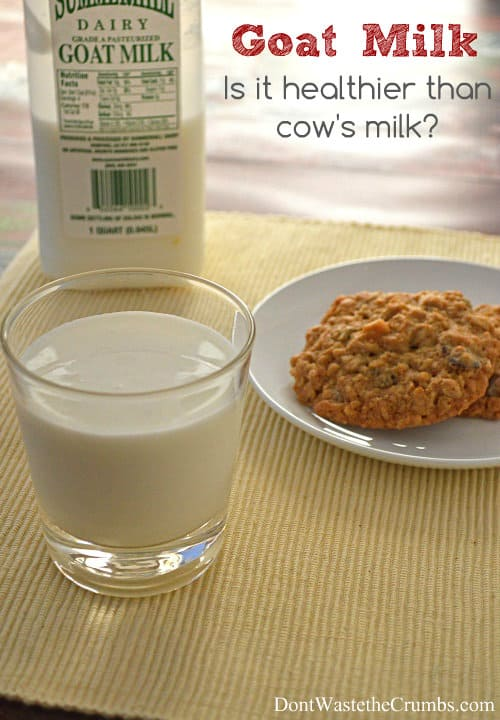 is goat milk healthier than cow's milk? Here are 7 benefits you might not have heard of. :: DontWastetheCrumbs.com