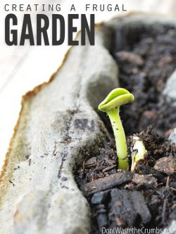 Wondering how to start a frugal urban garden bed? These practical tips will help you start the best budget-friendly garden from scratch! :: DontWastetheCrumbs.com