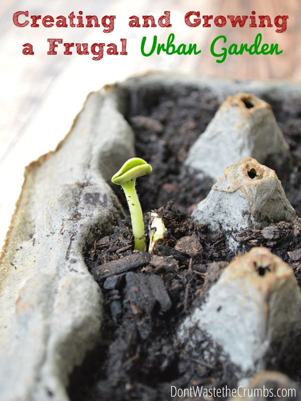 Creating and Growing a Frugal Garden | DontWastetheCrumbs.com