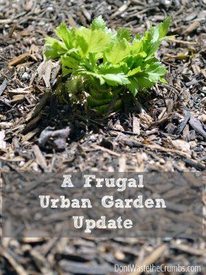 A Frugal Urban Garden Update