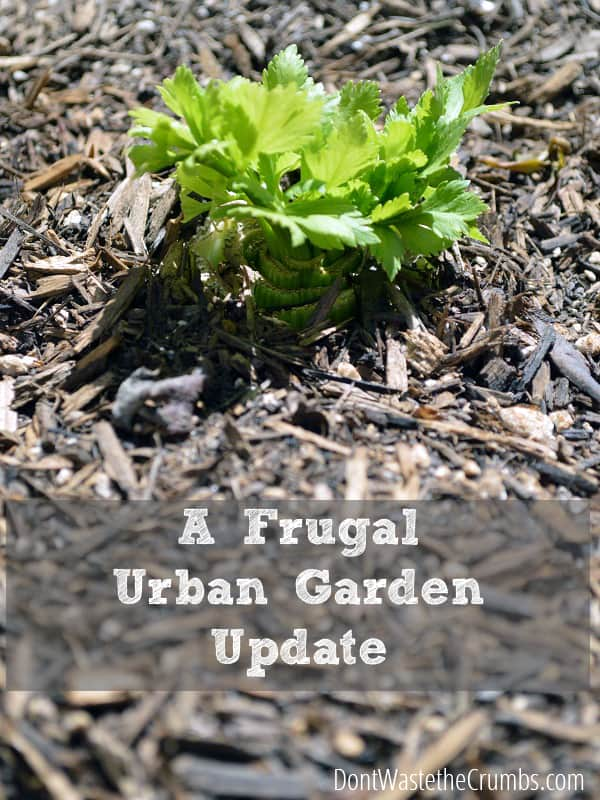 An update on our frugal urban garden, one month in! :: DontWastetheCrumbs.com