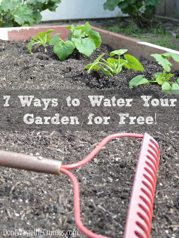 7 ways to water the garden for free - Ways saving water watering garden ...