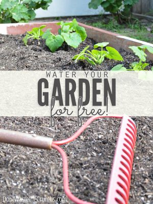 7 Ways to Water the Garden for Free