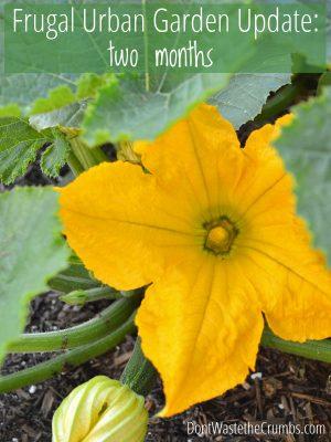 Urban Garden Update:  Two Months
