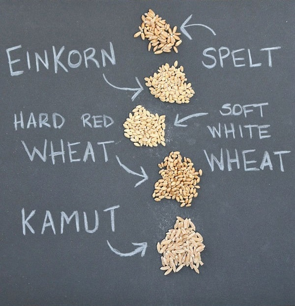 Do you struggle with gluten intolerance? Einkorn may be the solution. This ancient grain remains unchanged and contains all the original enzymes, making this easier to digest than modern wheat and providing hope for gluten-free diets! :: DontWastetheCrumbs.com