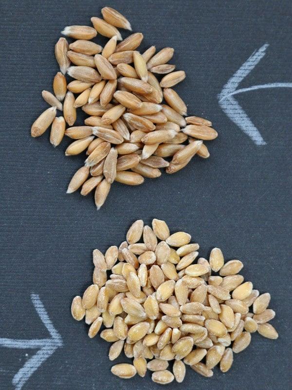 Einkorn A Wheat For The Gluten Free