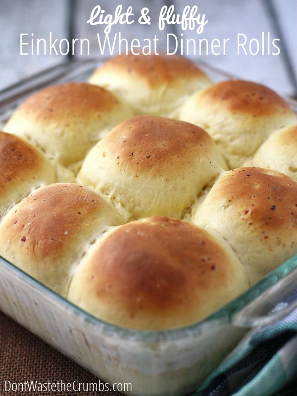 Recipe: Light and Fluffy Einkorn Dinner Rolls