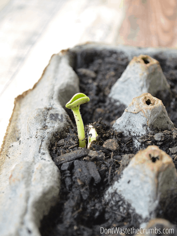 Creating and Growing a Frugal Garden
