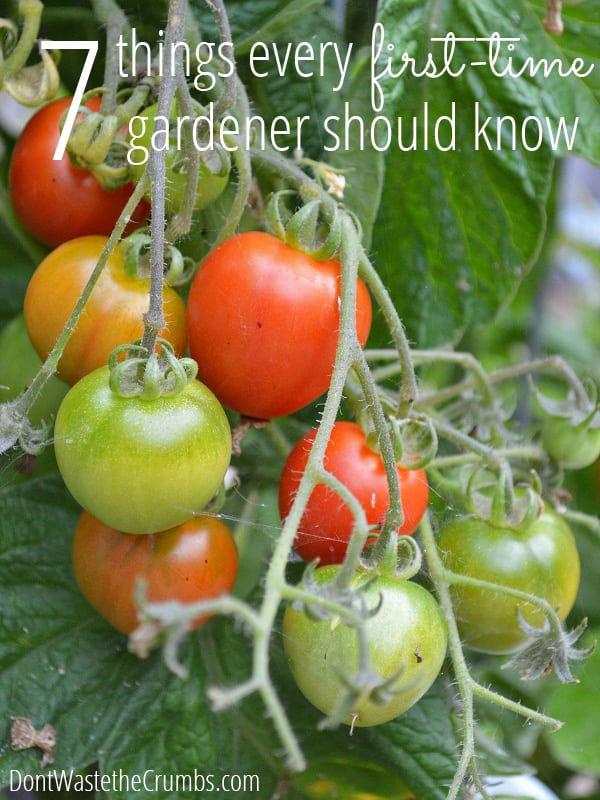 Charmant New To Gardening? These 7 Tips For A First Time Gardener Are A Must Read