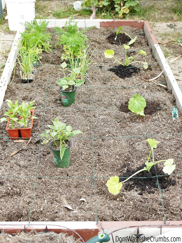 urban square foot gardening for beginners, Natural flower