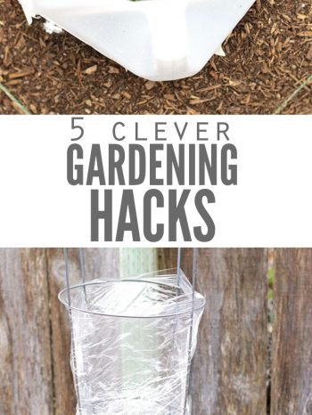 "Two images, the first is a milk jug cut out around a basil plant. The second image is a tomato plant with a tomato cage wrapped in plastic wrap. Text overlay says, ""5 Clever Gardening Hacks""."
