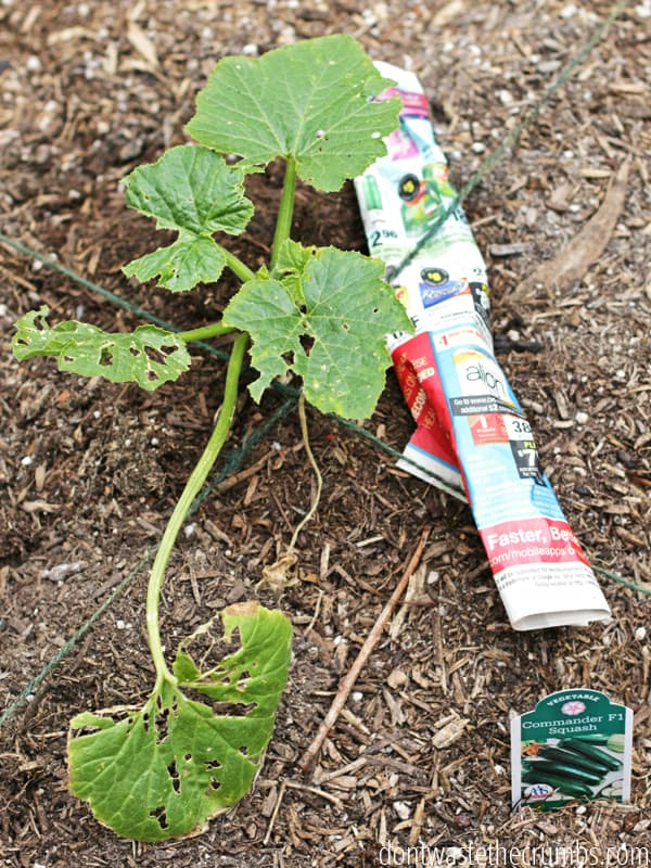 Tomatoes, bugs, watering, battling wind. Try these awesome gardening hacks to keep your garden growing strong!