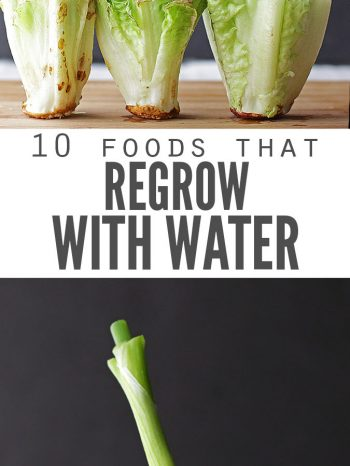 "Two images, the first has three romaine lettuce hearts that are each regrowing leaves, the second is a green onion in a glass of water, regrowing. Text overlay says, ""10 Foods that Regrow with Water""."