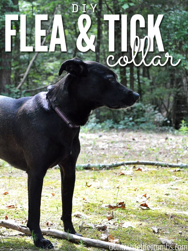 Make your own flea and tick collar with essential oils with this simple DIY recipe. A short soak & overnight dry keeps flea and ticks off dogs for a month! A great budget tip and a simple way to save money on pets! :: DontWastetheCrumbs.com
