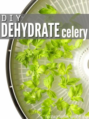 Don't Waste the Celery! (DIY Dried Celery)
