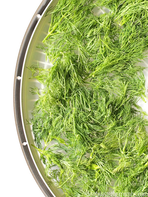 Dehydrate-Dill-1