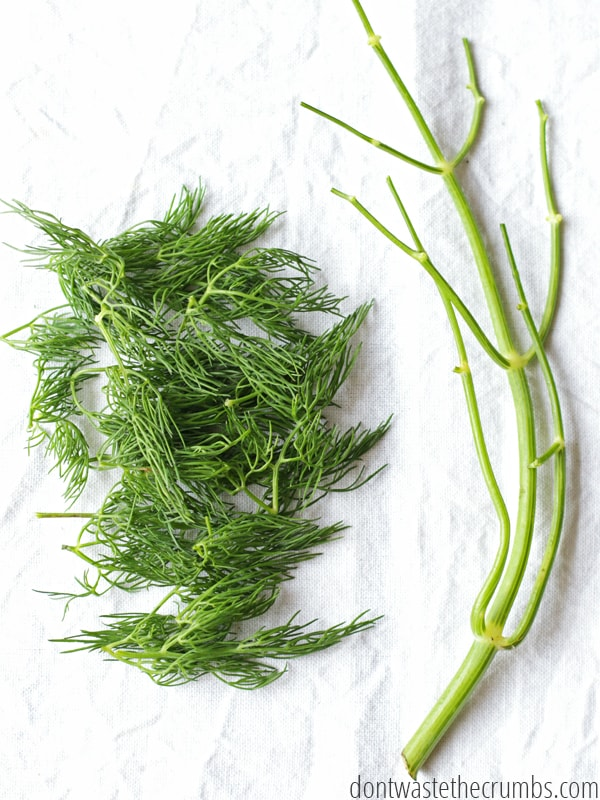 Dill weed stem with dill leaves removed.