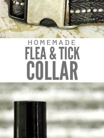 """Two images, the first is a close up of a dog collar, the second is a bottle of flea and tick repellent. Text overlay says, """"Homemade Flea & Tick Collar""""."""