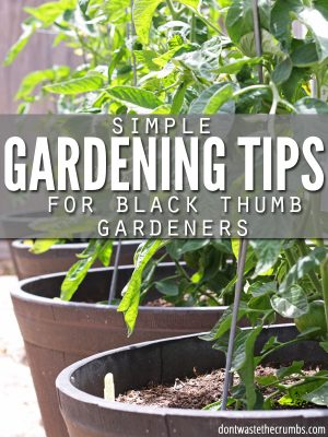 Gardening Tips for People Who Can't Garden
