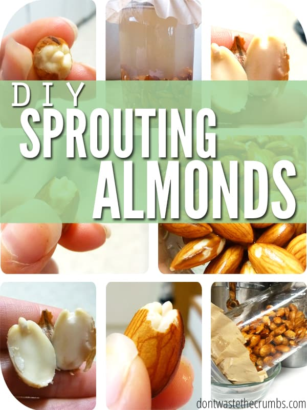 Give your food life! This simple tutorial teaches you how to sprout almonds and give a little boost of nutrition in your diet! :: DontWasteTheCrumbs.com