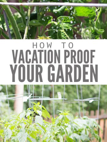 "Two images, the first of a watering can watering some tomato plants. The second image is of a row of tomato plants in tomato cages. Text overlay says, ""How to Vacation Proof Your Garden""."