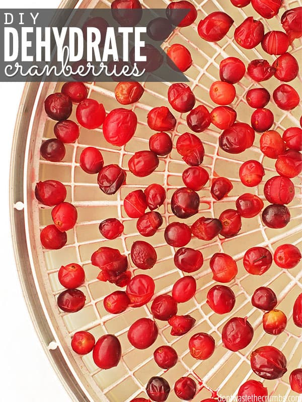Easy tutorial for how to dehydrate cranberries. When cranberries are in season, buy an extra bag and stock up! Homemade dehydrated cranberries are so easy to make, and this post includes the breakdown of the cost of making them yourself, so you can decide if it's cheaper to make them or buy them in your area! :: DontWastetheCrumbs.com