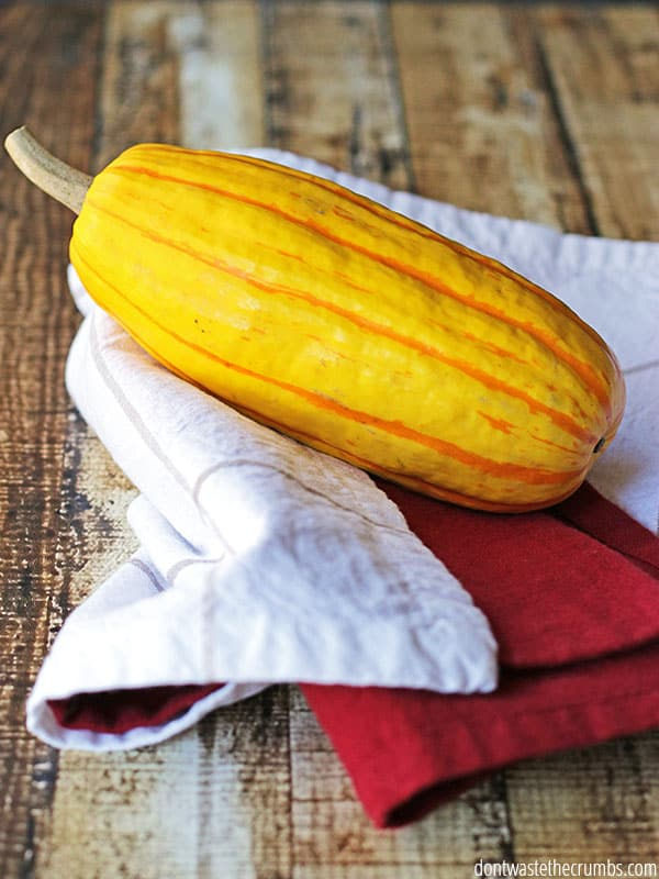 Squash is a well-known winter food, in season for January, It comes in a variety of shapes and sizes and can be used in salads, soups and stews.