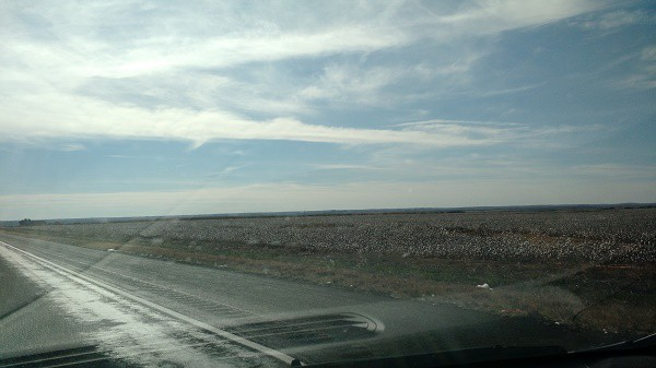 Day 3 Texas Cotton Fields