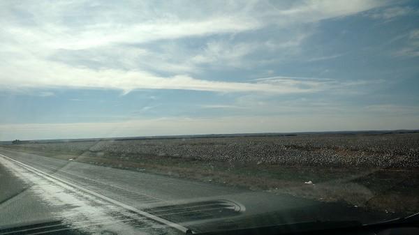 Day 3 Texas Cotton Fields