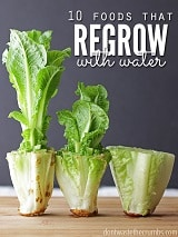 Regrow Food in Water