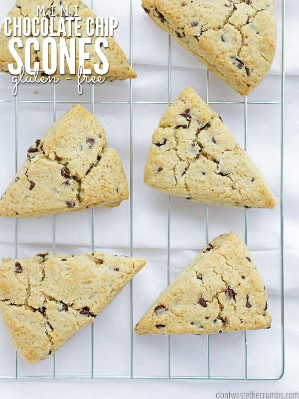 Oh my goodness, these mini chocolate chip scones are the best scones on the planet - and I'm not kidding! They're gluten-free, just barely sweet and since they're mini, they're absolutely adorable. Every time I make these chocolate chip scones I have to make a double batch because the family devours them! :: DontWastetheCrumbs.com