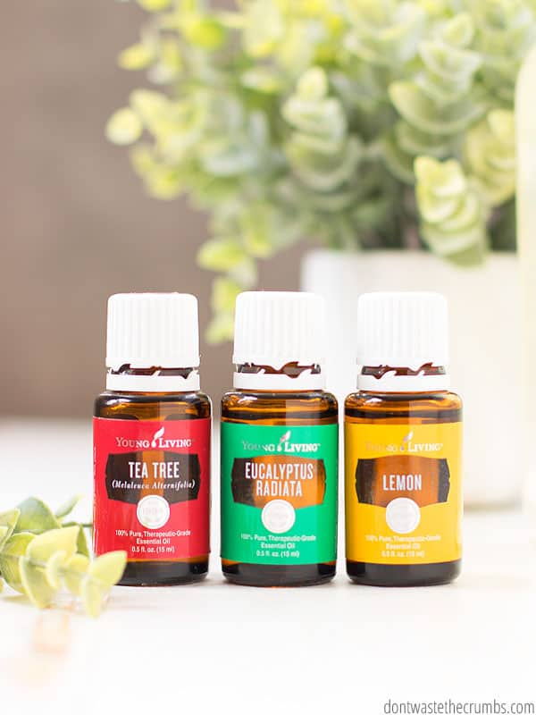A red bottle of Tea Tree Oil, a green bottle of Eucalyptus Tadiata, and a yellow bottle of Lemon Essential oils sitting next to each other. A green plant in a white holder is in the background.