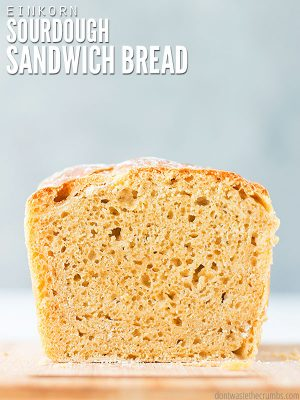 This easy, no knead sourdough bread recipe makes the perfect sandwich loaf and has a soft crust! Made with healthy multigrain einkorn flour. :: DontWastetheCrumbs.com