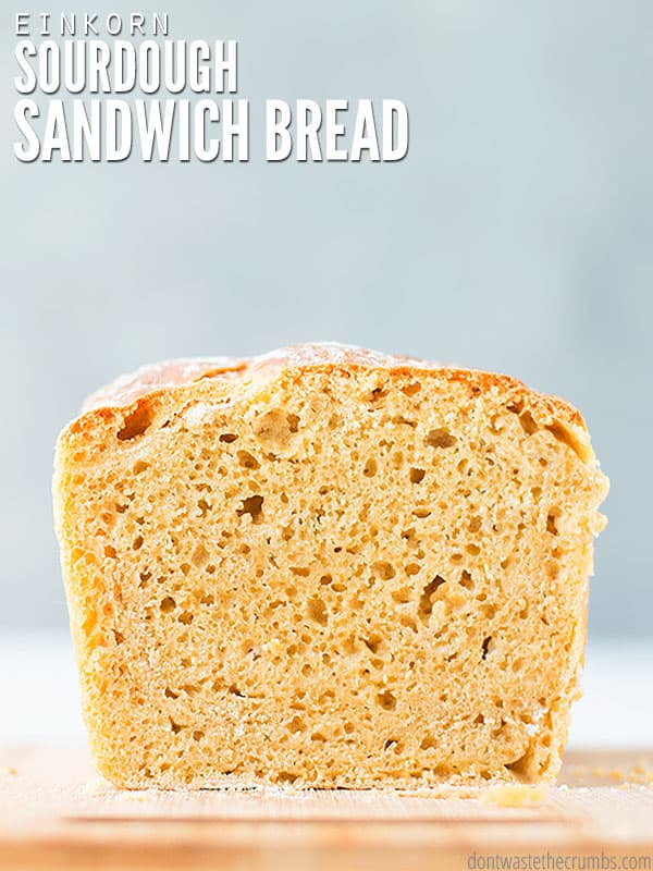 This sourdough sandwich bread recipe is no knead and uses healthy einkorn flour!
