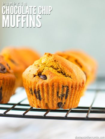 This easy recipe for healthy pumpkin chocolate chip muffins is a family favorite in the fall! Made with whole wheat flour and basic pantry ingredients. :: DontWastetheCrumbs.com