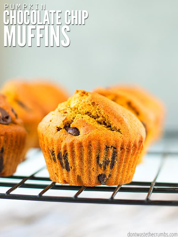 Use basic pantry staples for this easy whole wheat pumpkin chocolate chip muffin recipe!