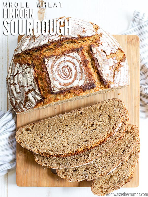 Einkorn flour is super healthy and can be used to make amazing sourdough bread. Learn the process of baking whole wheat sourdough with Einkorn flour with this consistent and easy to follow recipe!