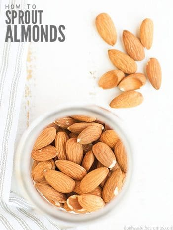 Give your food life! This simple tutorial teaches you about sprouted almonds. Boost the nutrition in your diet by sprouting nuts, beans, and grains! :: DontWastetheCrumbs.com