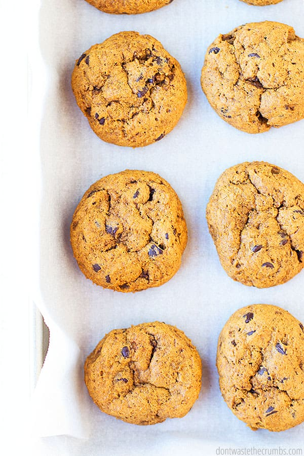 Six golden brown pumpkin chocolate chip cookies from a birds eye view. They are laid on parchment paper and a cookie sheet.